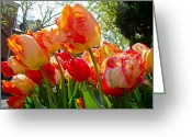 Phillie Photo Greeting Cards - Parrot Tulips in Philadelphia Greeting Card by Carol Senske