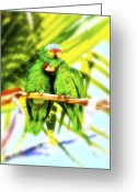 Buffett Greeting Cards - Parrotheads Greeting Card by Gus McCrea