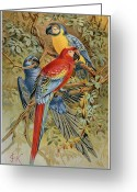 Ara Ararauna Greeting Cards - PARROTS: MACAWS, 19th CENT Greeting Card by Granger