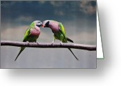 Kissing Greeting Cards - Parrots Greeting Card by Ngkokkeong Photography