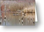 Canada Swan Greeting Cards - Partners For Life Greeting Card by James Steele