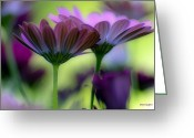 Depth Of Field Greeting Cards - Party on my Windowsill Greeting Card by Jayne Logan