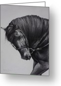 Gaited  Horse Greeting Cards - Paso Fino Greeting Card by Harvie Brown