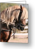 Horse Pyrography Greeting Cards - Paso Fino Stallion Greeting Card by Wendi Evans