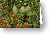 Pasqueflower Greeting Cards - Pasqueflower Seedpod and Paintbrush Greeting Card by Sean Griffin