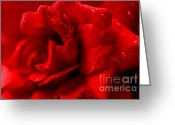 Floral Design Greeting Cards - Passion for Flowers. Sensual Petals Greeting Card by Jenny Rainbow