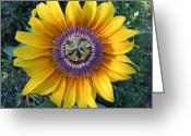 Cocoons Greeting Cards - Passion For The Sun Greeting Card by Eric Kempson