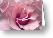Flower Abstract Greeting Cards - Passion Pink Rose Flower Greeting Card by Jennie Marie Schell