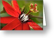 Stamen Greeting Cards - Passionate flower Greeting Card by Heiko Koehrer-Wagner
