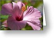 Fushia Photo Greeting Cards - Passionate Pink Greeting Card by Chris Ann Wiggins