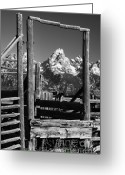 Grand Tetons National Park Greeting Cards - Past Its Time Greeting Card by Sandra Bronstein