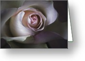 Flowers Photographs Greeting Cards - Pastel Flower Rose Closeup Image Greeting Card by Artecco Fine Art Photography - Photograph by Nadja Drieling