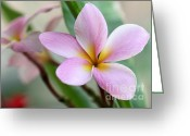 Exotic Tree Flowers Greeting Cards - Pastel Pink Plumeria Greeting Card by Sabrina L Ryan