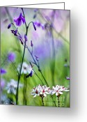 David Lade Greeting Cards - Pastel wildflowers Greeting Card by David Lade