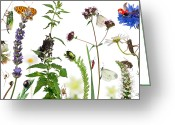 Spider Flower Greeting Cards - Pastoral Composition Of Insects Greeting Card by Life On White