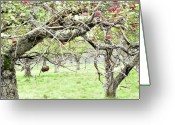 Country Scenes Photographs Greeting Cards - Pasture Renegades Part Two Greeting Card by Reb Frost