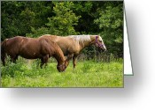 Quarter Horses Greeting Cards - Pasture Time Greeting Card by Doug Long