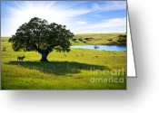 Grass Greeting Cards - Pasturing cows Greeting Card by Carlos Caetano