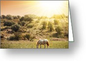 Sunrise Greeting Cards - Pasturing Horse Greeting Card by Carlos Caetano