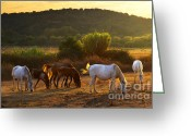 Sunlight Greeting Cards - Pasturing horses Greeting Card by Carlos Caetano