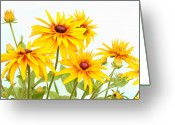 Susan Greeting Cards - Patch of Black-eyed Susan Greeting Card by Steve Augustin