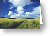 Country Lanes Photo Greeting Cards - Path in a countryside Greeting Card by Bernard Jaubert