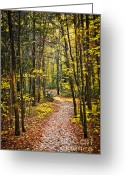 Hiking Greeting Cards - Path in fall forest Greeting Card by Elena Elisseeva