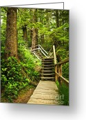 Rain Forest Greeting Cards - Path in temperate rainforest Greeting Card by Elena Elisseeva