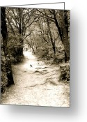 Everything Else Greeting Cards - Path Greeting Card by Kimberly Gonzales