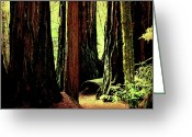 Redwood Greeting Cards - Path Through The Forest Edge . 7D5432 Greeting Card by Wingsdomain Art and Photography