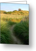 Beach Grass Greeting Cards - Path to Balston Greeting Card by Sue  Brehant