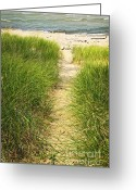 Ocean Path Greeting Cards - Path to beach Greeting Card by Elena Elisseeva