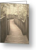Mountain Laurel Greeting Cards - Pathway Greeting Card by Melissa Petrey
