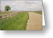 Fence Greeting Cards - Pathway Surrounded By Wooden Fence Greeting Card by Kathryn Froilan