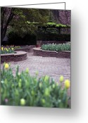 Garden Pathway Greeting Cards - Pathways Greeting Card by Edward Kreis