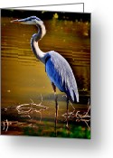 Herons Greeting Cards - Patience of the Heron Greeting Card by Emily Stauring