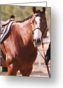Quarter Horses Greeting Cards - Patience Greeting Card by Wendi Evans