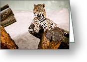 Retratos Greeting Cards - Patient Jaguar Greeting Card by Ezequiel Rodriguez Baudo