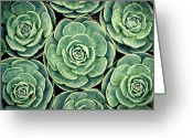 Natural Pattern Greeting Cards - Pattern From Nature Greeting Card by Bbq