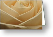 Flower Photograph Greeting Cards - Patterns in Rose Petals  Off White Greeting Card by Laura Mountainspring