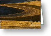 Wheatfields Photo Greeting Cards - Patterns of Gold Greeting Card by Mike  Dawson