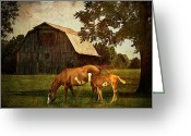 Horses Art Print Greeting Cards - Peace of country living Greeting Card by Lianne Schneider