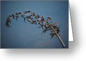 All Greeting Cards - Peaceful Fern3 Greeting Card by Kimberly Gonzales