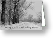 Winter Trees Photo Greeting Cards - Peaceful Holiday Card Greeting Card by Carol Groenen