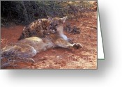 Puma Greeting Cards - Peaceful Moments Greeting Card by Sandra Bronstein