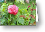Creative Passages Photo Greeting Cards - Peach Rose Greeting Card by Cassandra Donnelly