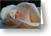 2012 Flower Calendar Greeting Cards - Peach Rose Greeting Card by Juergen Roth