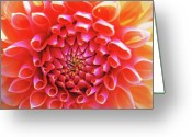 Flower Greeting Cards Greeting Cards - Peachy Dahlia Greeting Card by Kathy Yates