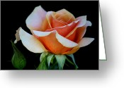 Peachy Greeting Cards - Peachy Green Greeting Card by Karen M Scovill