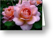 Photographic Art Greeting Cards - Peachy Pink Greeting Card by Rona Black